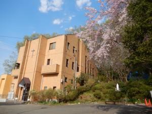復活祭の日のカトリック高幡教会!桜も綺麗でした。